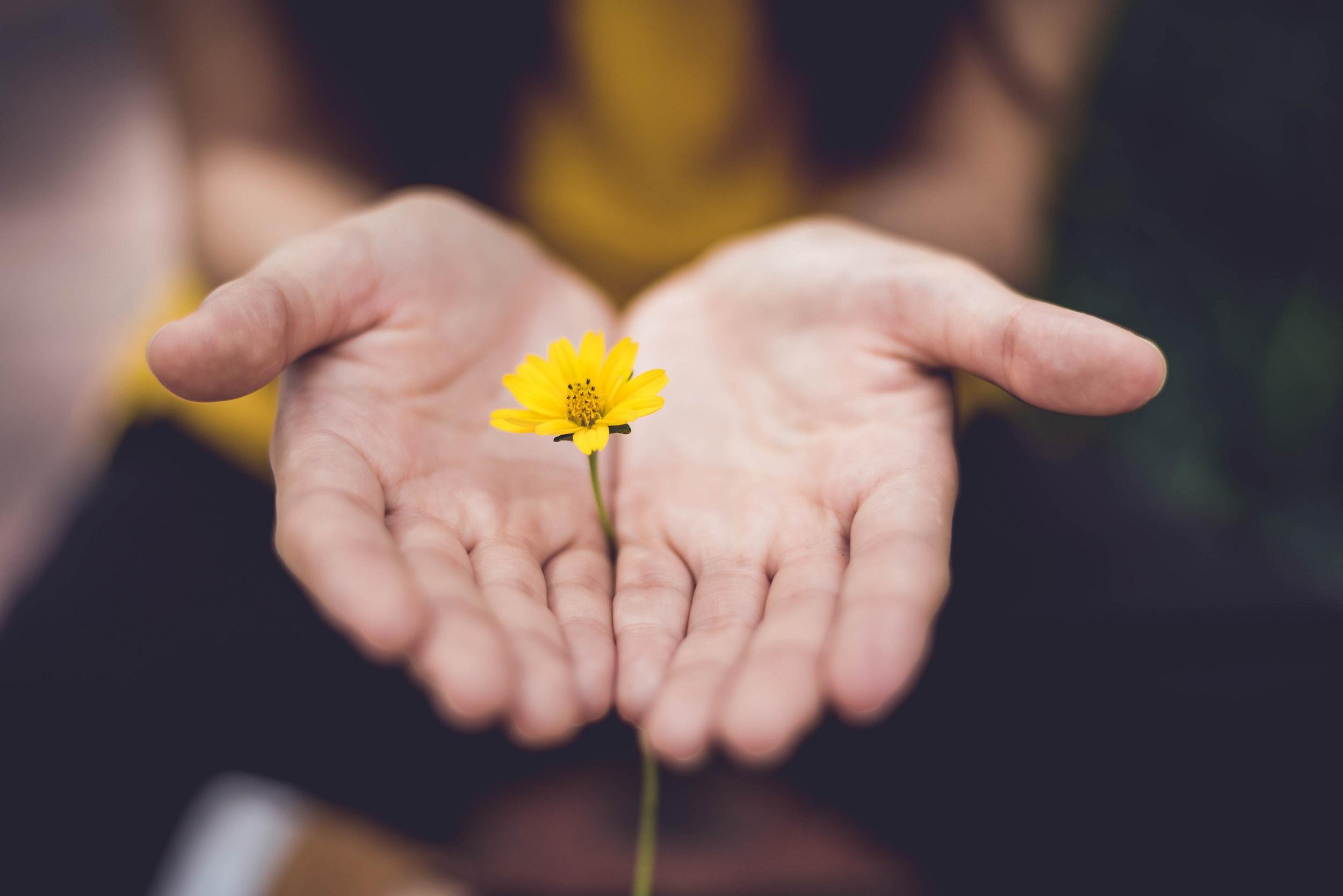 Serenity - Nos valeurs